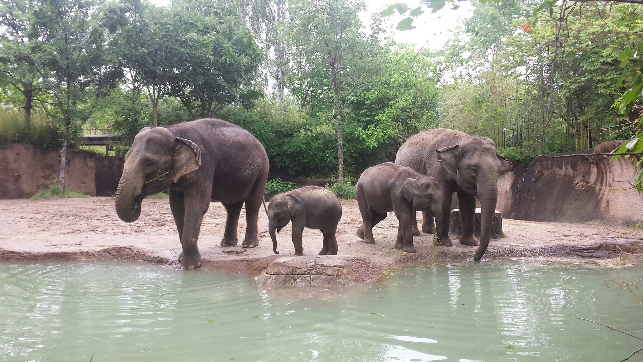 World Elephant Day To Be Celebrated Aug At Saint Louis Zoo - The 12 best zoos in the world
